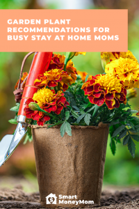 Garden Plant Recommendations For Busy Stay at Home Moms