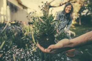 Gardening Tools Every Household Should Have